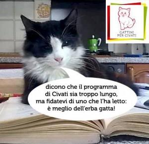Gatto Artù