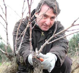 Gianfranco Fino