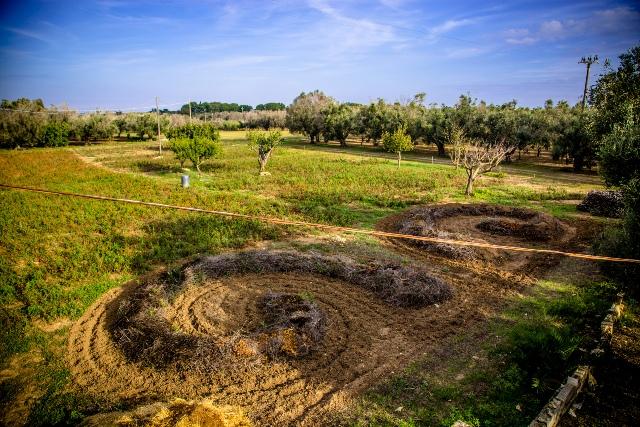 Sei ettari di terreni abbandonati presi in comodato d'uso e coltivati dai ragazzi di Karadrà (ph Enrica Chezzi)