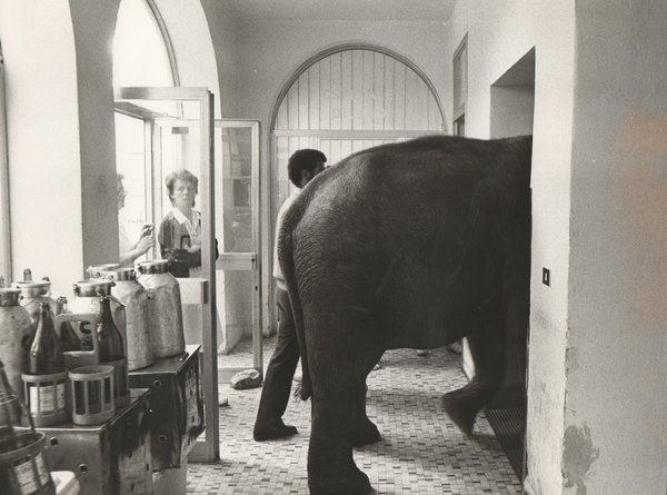 20_elefante_in_camera