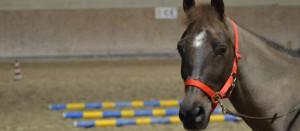 CavalloEquilandia