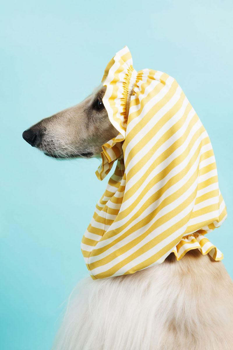 temellini milano dog a porter 11