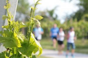 RUNNING vigne