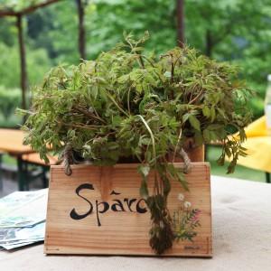 asparago arta