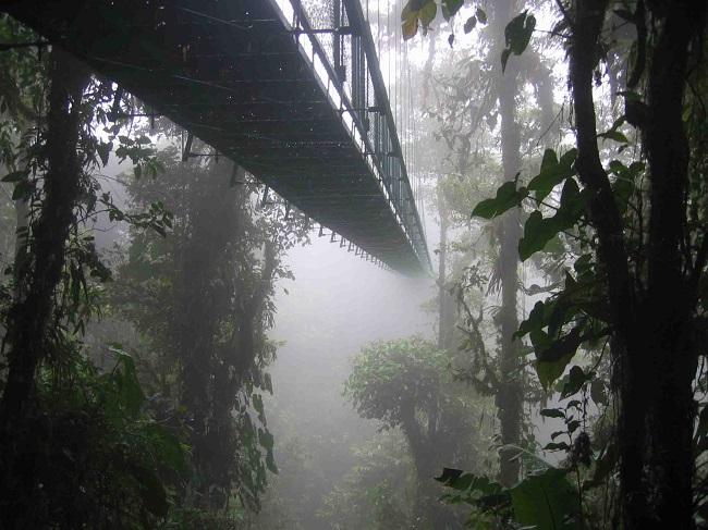4 foresta monteverde