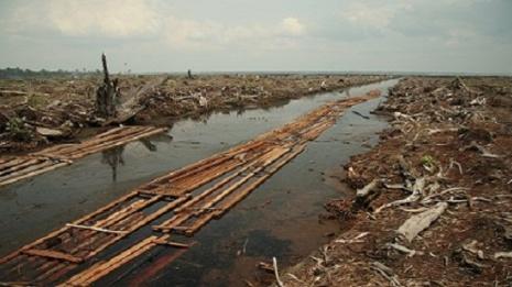 riau_deforestation_2006_3
