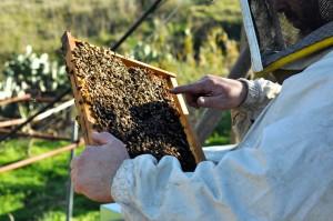 claudio mostra l'ape regina