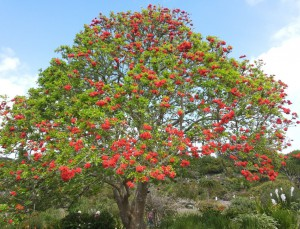 albero in fiore