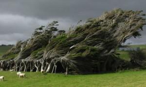 alberivento