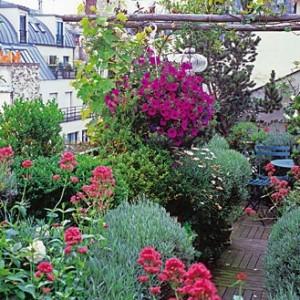 piante-balcone