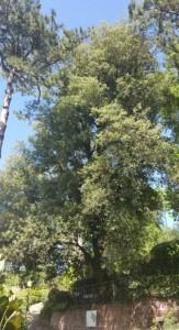 orto botanico leccio 2