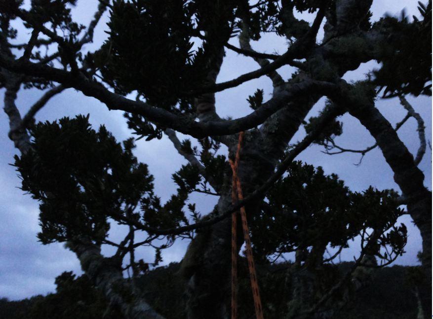 Arbornauta Blog Finegil