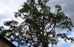 quercia di modena 4