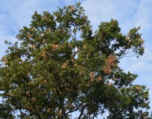 quercia modena 2