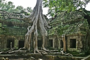 ficus tempio 2