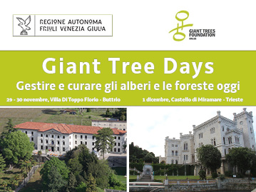 Giant_Tree_Days_Slide