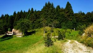 Prati e boschi del Grappa versante trevigiano