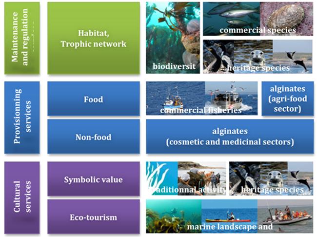 Servizi ecostistemici del Parc Neturel Marin Iroise, fonte www.marine-ecosystem-services.eufonte:
