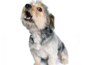118439265-dog-barks-left-alone-632x475