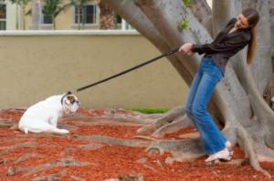 strattonare-il-cane-durante-la-passeggiata