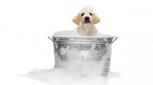 lavare-il-cane-consigli-lavare-il-cane