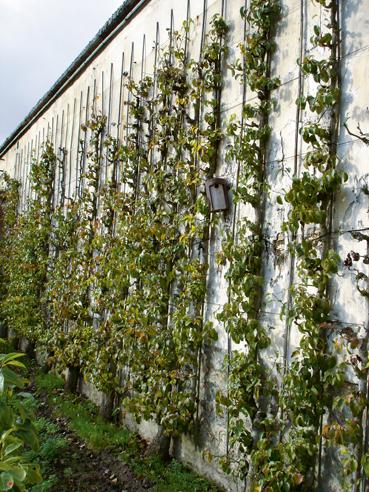 Il verde che non ti aspetti casa design - Piante per coprire muri ...