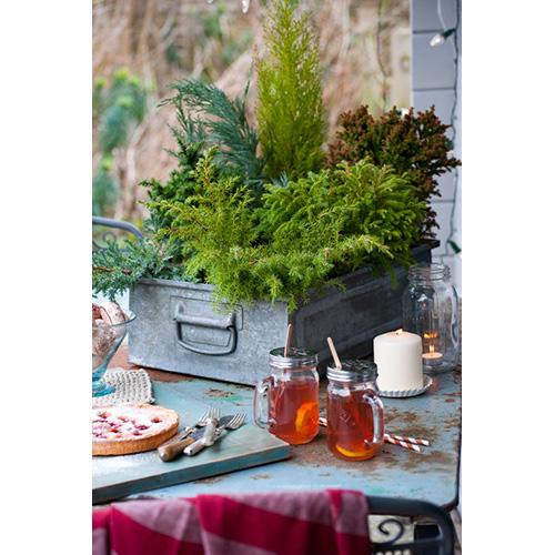 Affordable per chi ha poco spazio le conifere nane sono for Idee seminterrato per piccoli scantinati