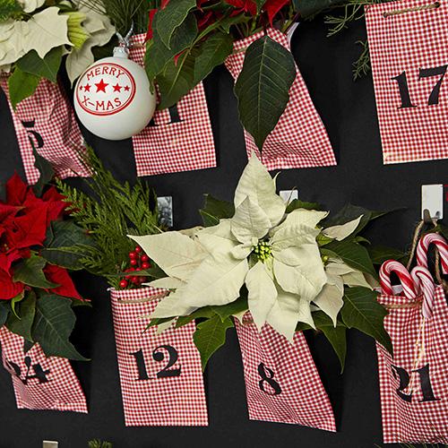 Calendario dell'avvento fai-da-te decorato con piante di Poinsettia in miniatura di diversi colori