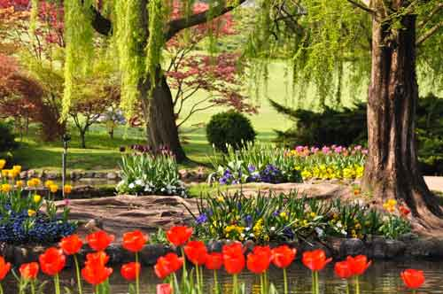 """Parco Giardino Sigurtà, dal 6 marzo al 30 aprile, ospita la mostra """"Tulipanomania"""" a Valeggio sul Mincio, Verona"""