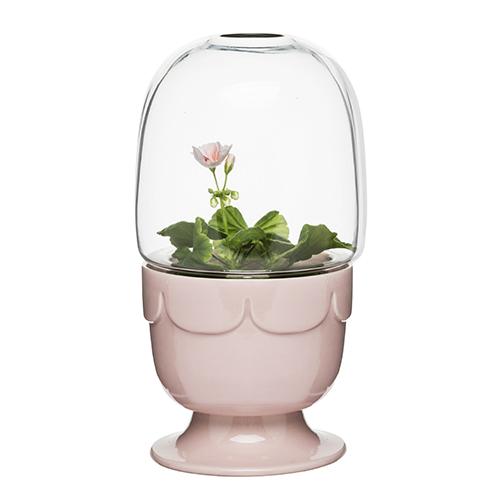 La mini serra di Sagaform aiuta a creare le condizioni ideali per la crescita della pianta (32,60 euro)