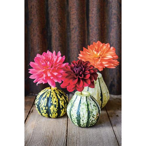 In Natura in casa 50 progetti suddivisi per stagione. Nel capitolo dedicato all'autunno un'originale idea: come creare un vaso con un zucca