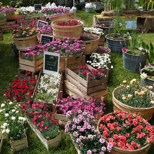 7 mete tra piante e fiori ville e castelli casa design for Piante e fiori