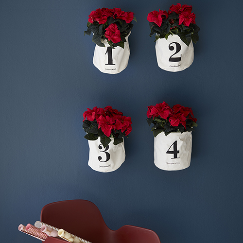 Per decorare le pareti: le Stelle di Natale recise sono all'interno di una busta che nasconde lo stelo in una piccola ampolla d'acqua