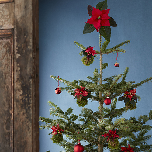 La pianta come valida alternativa alle più tradizionali decorazioni in carta e plastica: le palline sono realizzate con Stelle di Natale e muschio ed è protagonista in cima all'albero essendo sistemata all'interno di un'ampolla di vetro riempita di acqua, poi avvolta con un nastro verde e appesa all'albero