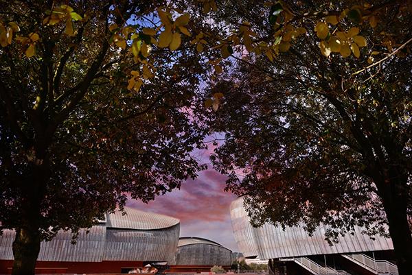I colori e i profumi di oltre cento alberi sono i protagonisti dell'installazione <em>Un bosco per Roma</em> che inizia su viale Pietro de Coubertin e si snoda fino al cuore della Cavea dell'Auditorium parco della musica