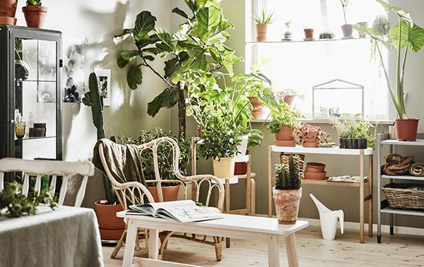 arredare con le piante casa design. Black Bedroom Furniture Sets. Home Design Ideas