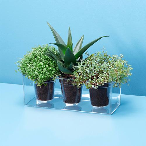 """<em>Cube</em> di <a href=""""http://www.boskke.com"""">Boskke</a> è il vaso trasparente che permette di guardare il cuore di una pianta: la terra, l'acqua e le radici"""