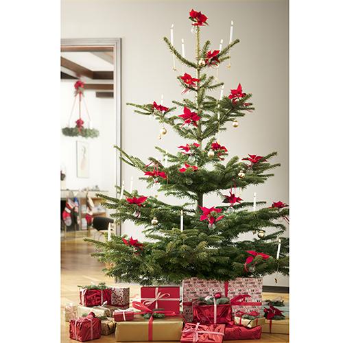 """A dicembre non manca mai in casa. Infatti parlando di addobbi si pensa subito a questa pianta che la festività la porta proprio nel nome: la Stella di Natale. Si può utilizzare anche per vestire l'albero al posto delle classiche palline. Lo spiegano i flower designer del progetto <a href=""""http://www.starsuniteeurope.eu/it/"""">Stars for Europe</a>"""