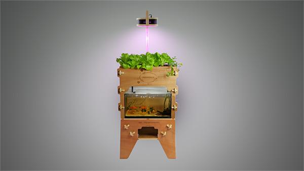 Aquapioneers, un progetto di agricoltura urbana