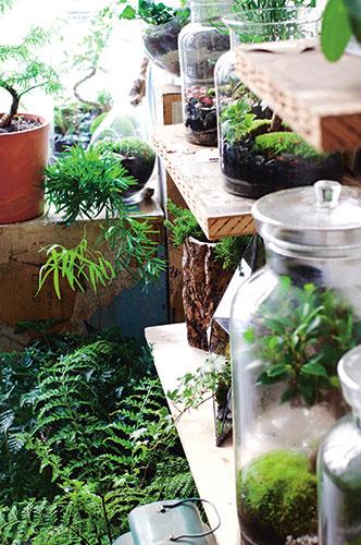 Terrarium giardini in bottiglia da sfoggiare sulla - Giardini in bottiglia ...