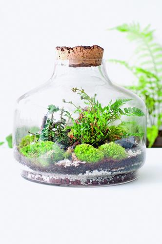 Il terrario in foto si ispira ai boschi francese. Anna Bauer e Noam Levy hanno scelto di mettere sotto vetro felce ed edera, due piante tipiche della pianura argillosa di Chambord che dà il nome a questa installazione vegetale