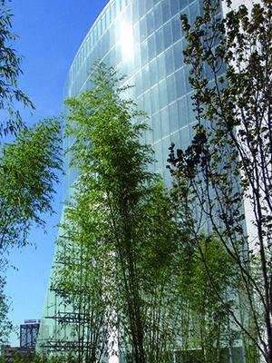 I bambù nel progetto paesaggistico di Patrizia Pozzi per il Vodafone Village di Milano (foto Alessandra Ferlini)
