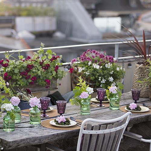 """Per far sentire davvero benvenuti i vostri ospiti e rendere più accogliente la tavola basta impreziosirla con alcuni dettagli creativi. Preparate ad esempio dei segnaposto con i gerani, un modo facile ed economico ma di grande effetto (foto <a href=""""http://www.pelargoniumforeurope.com"""">Pelargonium for Europe</a>)"""