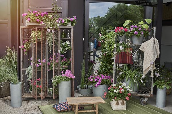 Come curare le piante al ritorno dalle vacanze casa design for Curare le piante