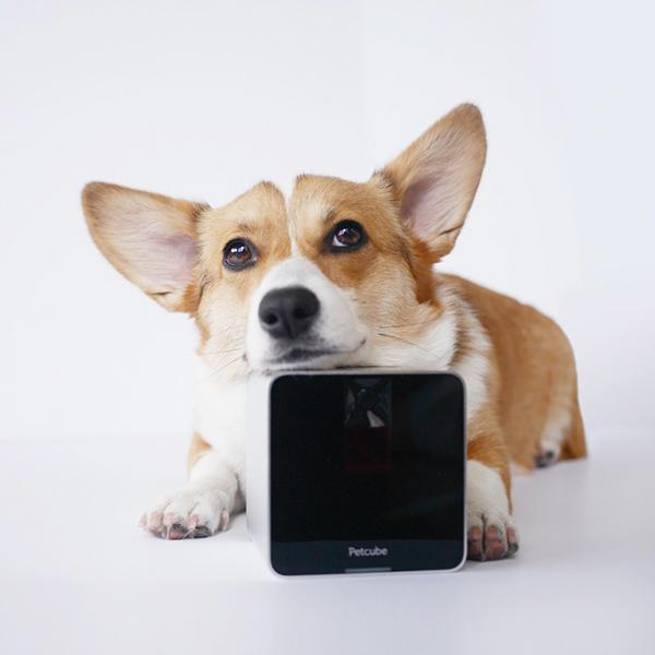 """<a href=""""https://petcube.com/"""">Petcube Play</a> è la telecamera interattiva Wi-Fi che permette di monitorare e parlare con il proprio amico quando si è fuori (prezzo 169 euro)"""