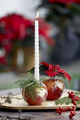 Nota sulla Stella di Natale recisa: se i gambi saranno subito sigillati dopo il taglio la Stella di Natale rimarrà fresca sino a due settimane. Dopo il taglio sigillare gli steli immergendoli in acqua riscaldata a 60° per circa cinque secondi. Quindi immergerli in acqua fredda e poi sistemarli in acqua fresca all'interno di un vaso (foto Stars For Europe)