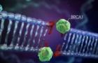 Tumore ovarico: Lombardia pronta a estendere l'accesso al test BRCA