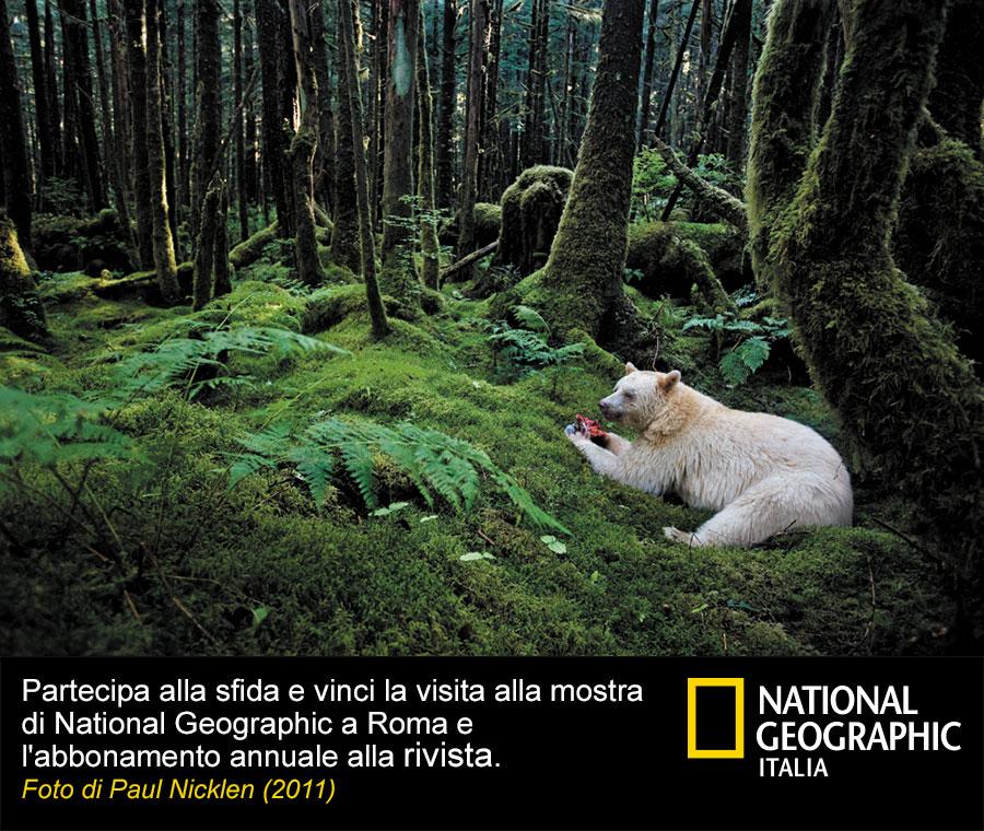 ng_foto_dida4