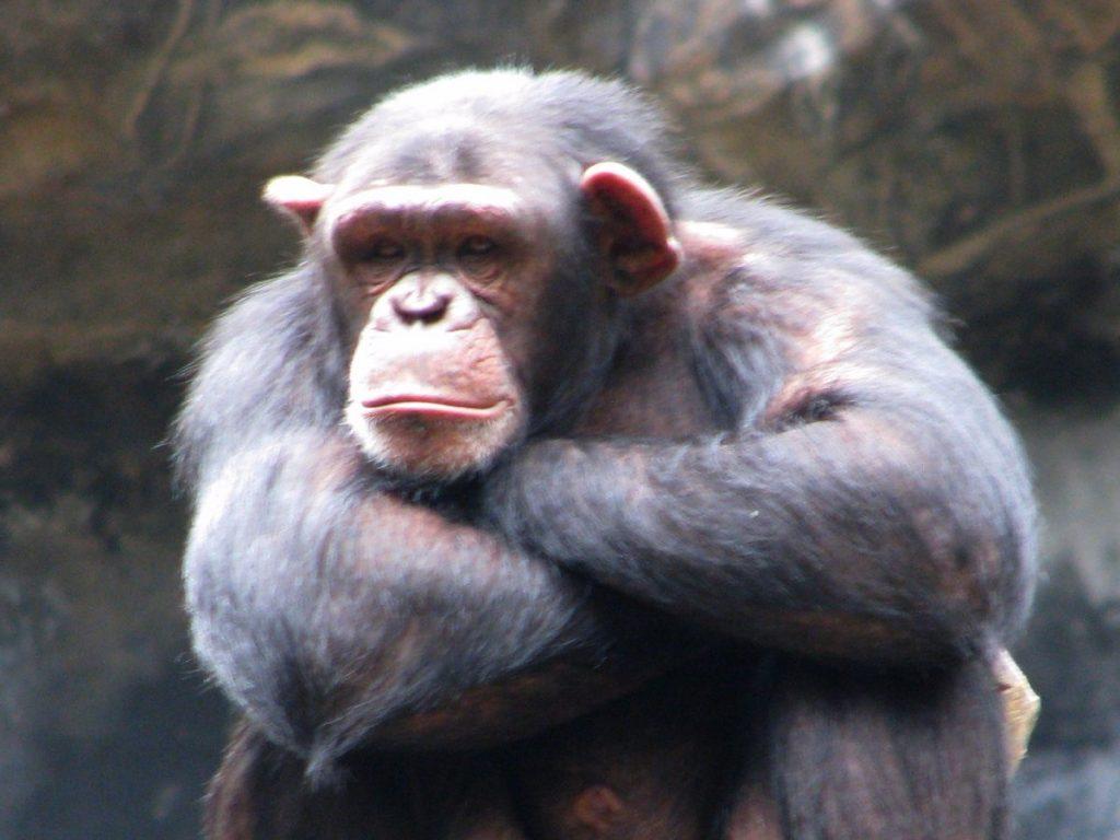 Fake News Bestiali 14 Falsi Miti Sugli Animali Un Esempio I