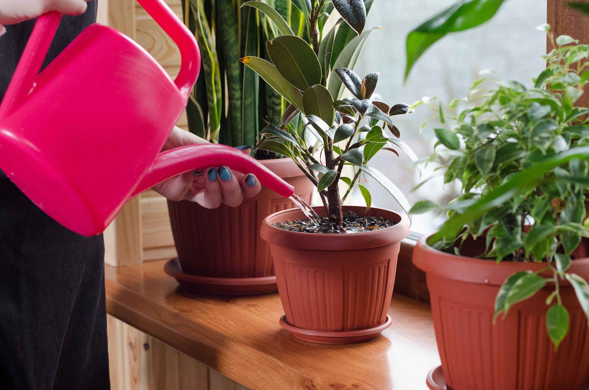 Piante Grasse Da Appartamento Quando Innaffiare.Un Esperto Di Piante Da Interni Rivela Un Semplice Trucco Per